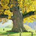 Lebensbaum_Icon